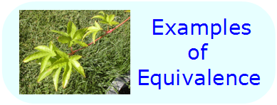 Math Properties - Examples of Equivalence Properties